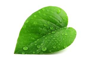 greenleaf300w